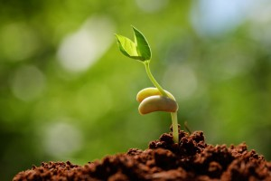 sprouting-seed-1
